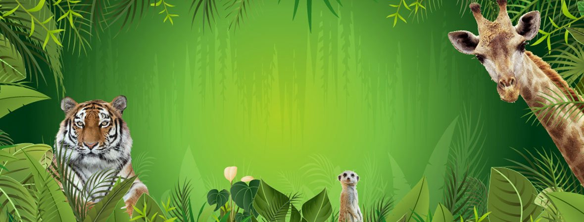 Treat the family to discounted tickets to Dublin Zoo thanks to SSE Reward